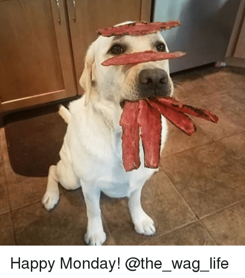 Life, Memes, and Happy: Happy Monday! @the_wag_life
