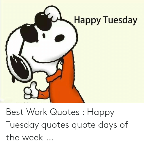 🐣 25 Best Memes About Happy Tuesday Quotes