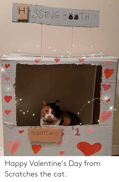 Happy Valentine: Happy Valentine's Day from Scratches the cat.
