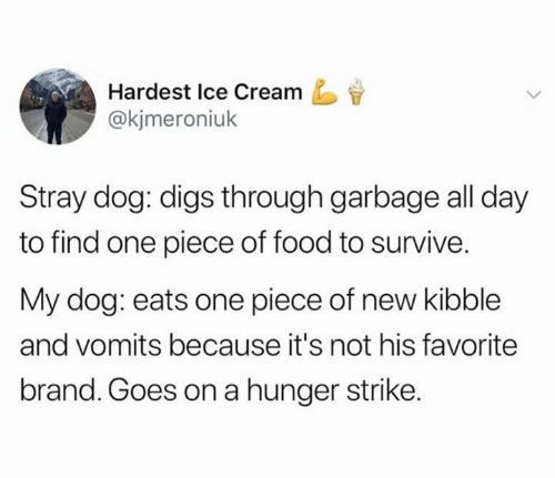 digs: Hardest Ice Cream  @kjmeroniuk  Stray dog: digs through garbage all day  to find one piece of food to survive.  My dog: eats one piece of new kibble  and vomits because it's not his favorite  brand. Goes on a hunger strike.