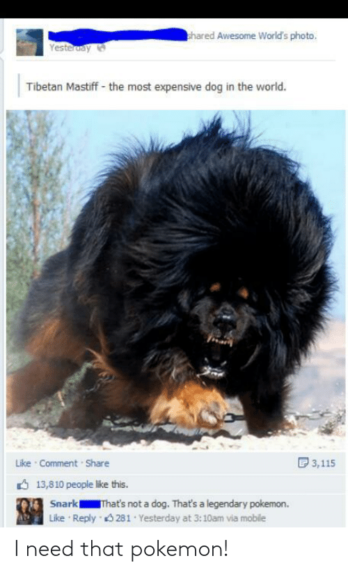 legendary: hared Awesome World's photo,  Yesteruay  Tibetan Mastiff - the most expensive dog in the world.  D 3,115  Like Comment Share  6 13,810 people like this.  Snark  That's not a dog. That's a legendary pokemon.  Reply 3 281 Yesterday at 3:10am via mobile  Like I need that pokemon!