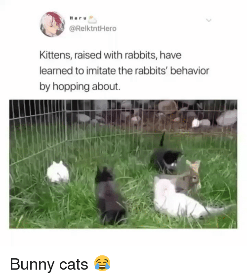 Cats, Memes, and Kittens: Haru  @RelktntHero  Kittens, raised with rabbits, have  learned to imitate the rabbits' behavior  by hopping about. Bunny cats 😂