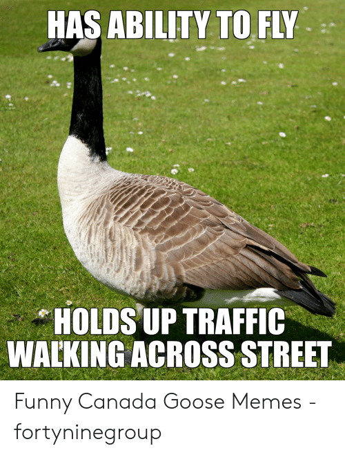 Funny Canada: HAS ABILITY TO FLY  HOLDS UP TRAFFIC  WALKING ACROSS STREET