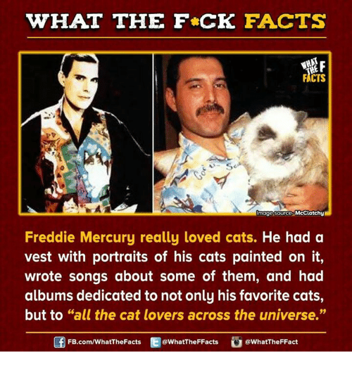 cat lover: HAT THE FCK FACTS  FACTS  mage source  McClatchy  Freddie Mercury really loved cats.  He had a  vest with portraits of his cats painted on it,  wrote songs about some of them, and had  albums dedicated to not only his favorite cats,  but to GG  the cat lovers across the universe.  all FB.com/WhatThe Facts  @WhatTheFFacts  @WhatTheFFact