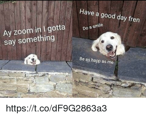 Memes, Zoom, and Good: Have a good day fren  Ay zoom in I gotta Do a smie  say something  Be as happ as me https://t.co/dF9G2863a3