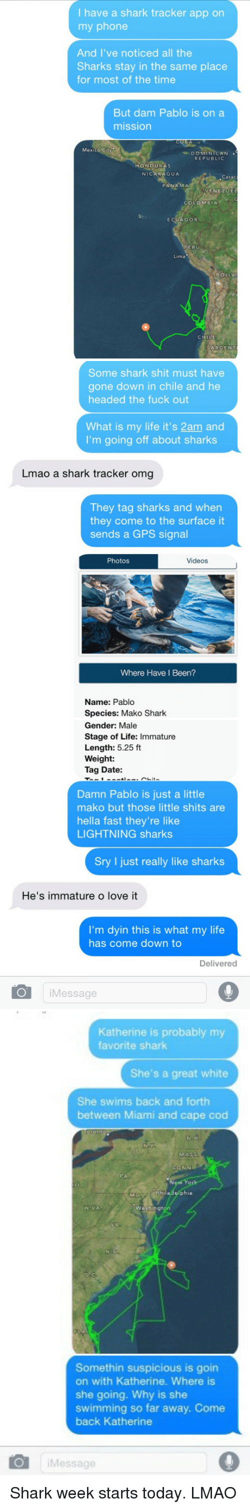 Where Is She: have a shark tracker app on  my phone  And I've noticed all the  Sharks stay in the same place  for most of the time  But dam Pablo is on a  mission  Mexico City  DO MINI CAN  REPUBLIC  HONDURAS  NICARAGUA  Carac  PANAMA  VENEZUEL  COLOMBIA  ECUADOR  PERU  Lima  BOLIV  CHILE  ARGENT   Some shark shit must have  gone down in chile and he  headed the fuck out  What is my life it's 2am and  I'm going off about sharks  Lmao a shark tracker omg  They tag sharks and when  they come to the surface it  sends a GPS signal  Photos  Videos  Where Have I Been?  Name: Pablo  Species: Mako Shark   Gender: Male  Stage of Life: Immature  Length: 5.25 ft  Weight:  Tag Date:  Damn Pablo is just a little  mako but those little shits are  hella fast they're like  LIGHTNING sharks  Sry I just really like sharks  He's immature o love it  I'm dyin this is what my life  has come down to  Delivered  O Message   Katherine is probably my  favorite shark  She's a great white  She swims back and forth  between Miami and cape cod  Somethin suspicious is goin  on with Katherine. Where is  she going. Why is she  swimming so far away. Come  back Katherine  i Message Shark week starts today. LMAO