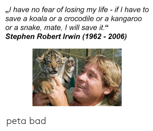 "kangaroo: ,,/ have no fear of losing my life - if I have to  save a koala or a crocodile or a kangaroo  or a snake, mate, I will save it.""  Stephen Robert Irwin (1962 - 2006)  35 peta bad"