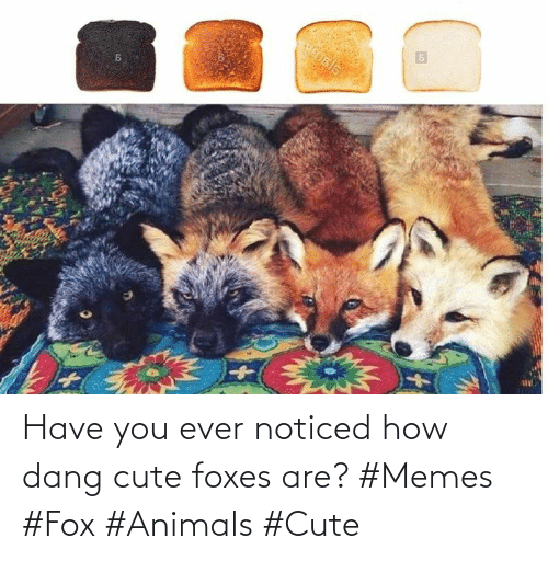 noticed: Have you ever noticed how dang cute foxes are? #Memes #Fox #Animals #Cute