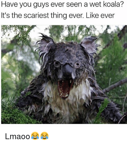 Memes, 🤖, and Koala: Have you guys ever seen a wet koala?  It's the scariest thing ever. Like ever Lmaoo😂😂