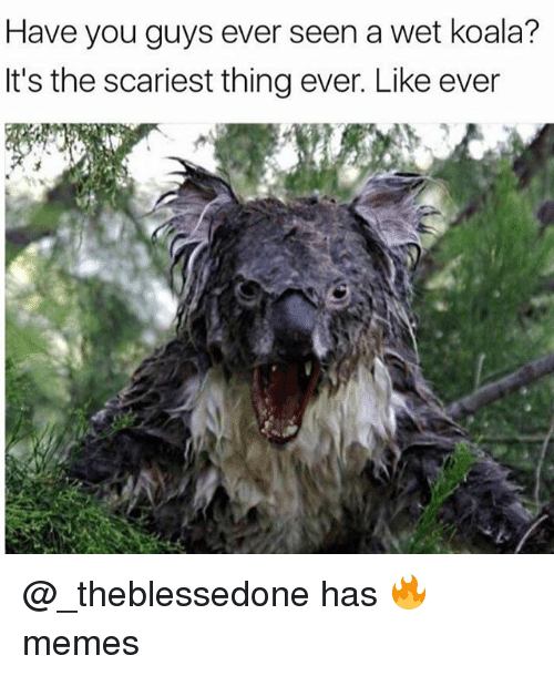 Memes, Trendy, and Koala: Have you guys ever seen a wet koala?  It's the scariest thing ever. Like ever @_theblessedone has 🔥 memes