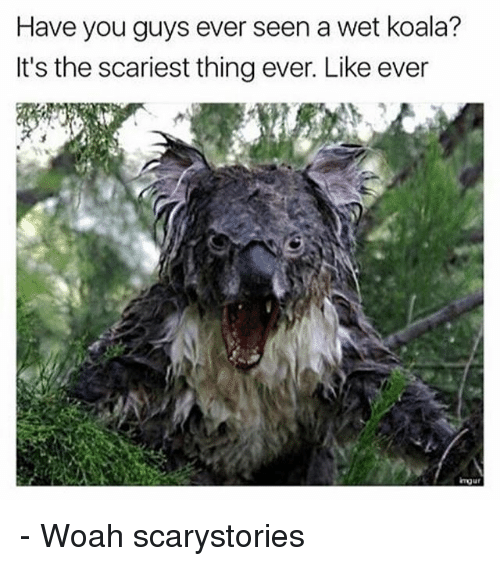 Memes, 🤖, and Koala: Have you guys ever seen a wet koala?  It's the scariest thing ever. Like ever - Woah scarystories