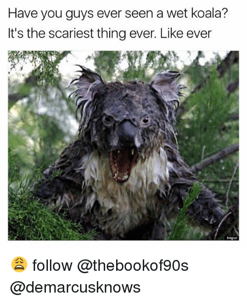 Memes, 🤖, and Koala: Have you guys ever seen a wet koala?  It's the scariest thing ever. Like ever  imuur 😩 follow @thebookof90s @demarcusknows