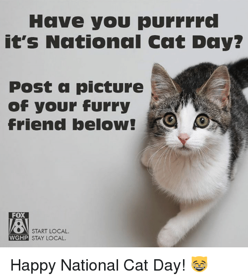 25 Best Memes About Happy National Cat Day Happy National Cat Day Memes