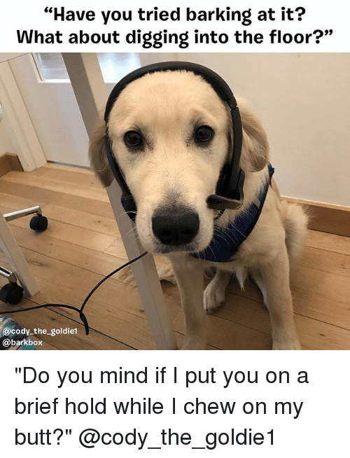 "Butt, Memes, and Mind: ""Have you tried barking at it?  What about digging into the floor?""  9)  @cody the goldiet  @barkbox ""Do you mind if I put you on a brief hold while I chew on my butt?"" @cody_the_goldie1"