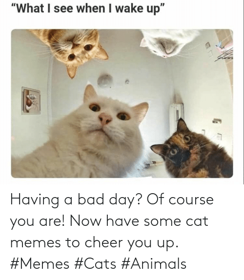 You Up: Having a bad day? Of course you are! Now have some cat memes to cheer you up. #Memes #Cats #Animals