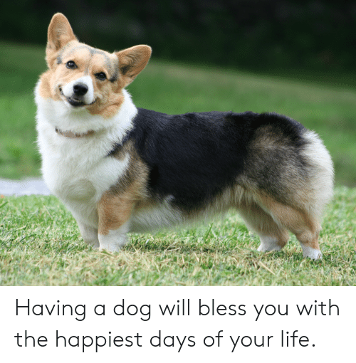 Life, Dog, and Will: Having a dog will bless you with the happiest days of your life.