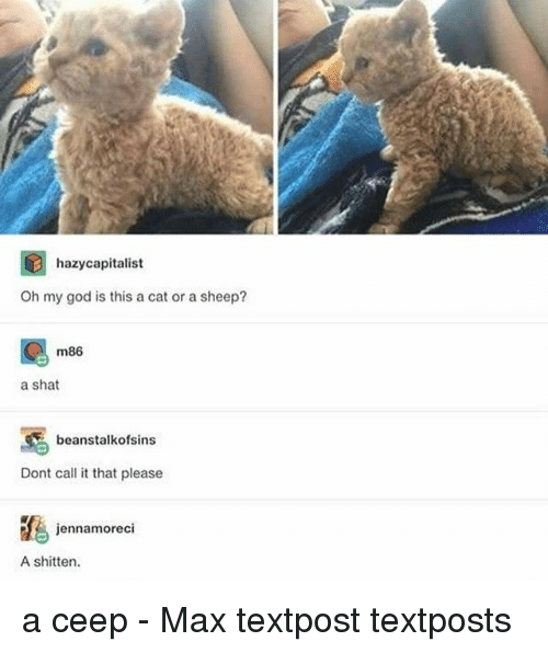 Textposts: hazycapitalist  Oh my god is this a cat or a sheep?  m86  a shat  beanstalkofsins  Dont call it that please  jennamoreci  A shitten. a ceep - Max textpost textposts
