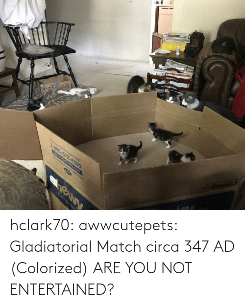 Colorized: hclark70: awwcutepets: Gladiatorial Match circa 347 AD (Colorized)  ARE YOU NOT ENTERTAINED?