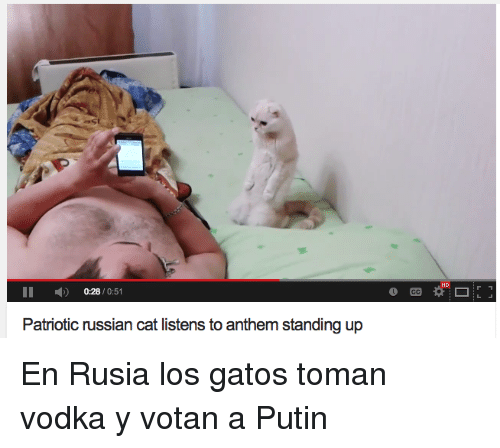 los gatos: HD  II 0:28/0:51  Patriotic russian cat listens to anthem standing up <p>En Rusia los gatos toman vodka y votan a Putin</p>