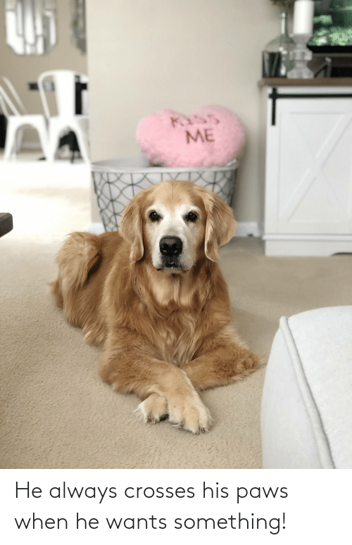 Paws: He always crosses his paws when he wants something!