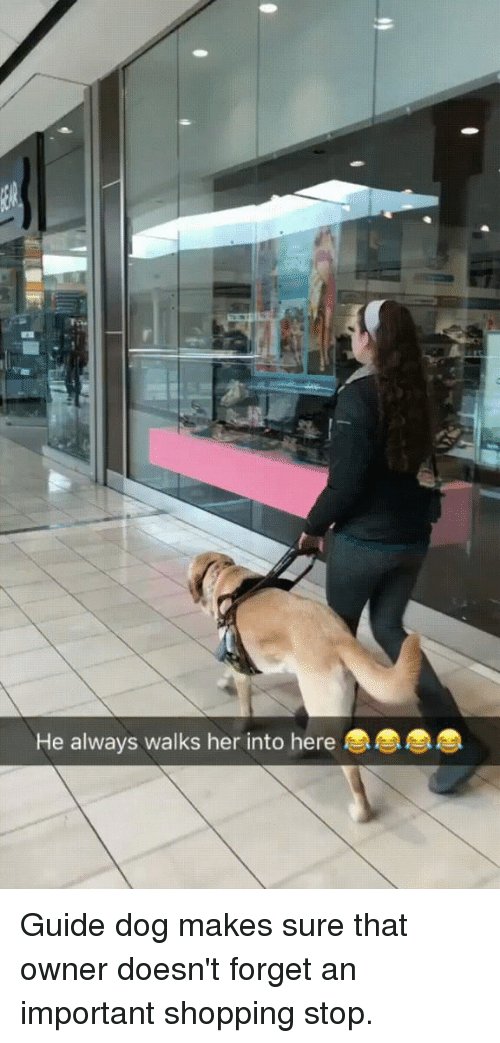 Shopping, Her, and Dog: He always walks her into here Guide dog makes sure that owner doesn't forget an important shopping stop.