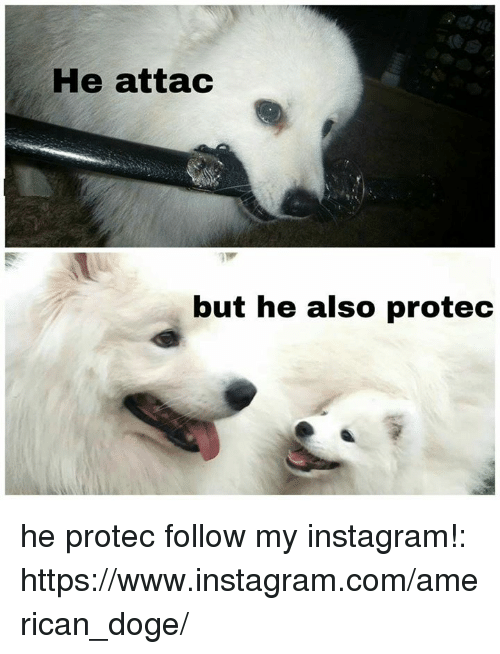 doges: He attac  but he also protec he protec follow my instagram!: https://www.instagram.com/american_doge/