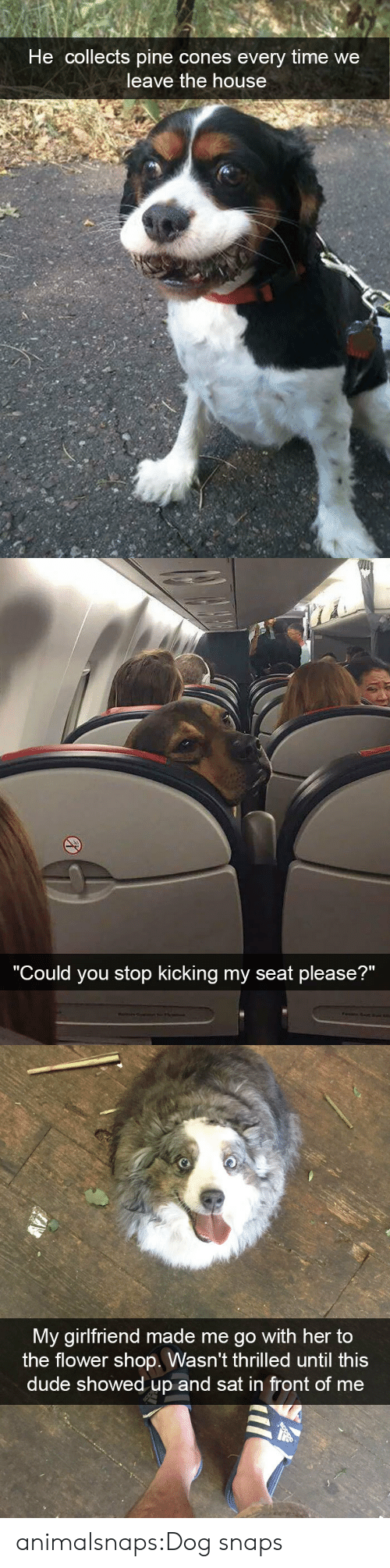 """thrilled: He collects pine cones every time we  leave the house   """"C  ould you stop kicking my seat please?""""   My girlfriend made me go with her to  the flower shop. Wasn't thrilled until this  dude showed up and sat in front of me animalsnaps:Dog snaps"""