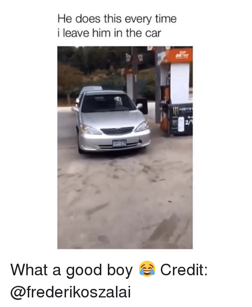 Memes, Good, and Time: He does this every time  i leave him in the car  2/ What a good boy 😂 Credit: @frederikoszalai