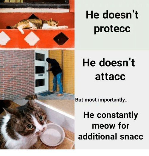 Humans of Tumblr, For, and Meow: He doesn't  protecc  He doesn't  attacc  But most importantly..  He constantly  meow for  additional snacc