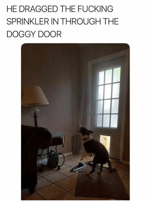 Fucking, Memes, and 🤖: HE DRAGGED THE FUCKING  SPRINKLER IN THROUGH THE  DOGGY DOOR