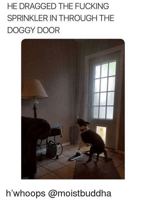 Fucking, Memes, and 🤖: HE DRAGGED THE FUCKING  SPRINKLER IN THROUGH THE  DOGGY DOOR h'whoops @moistbuddha