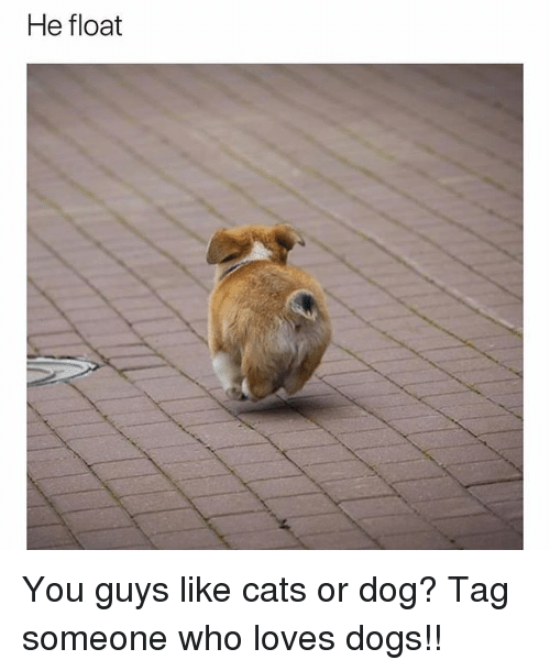 Cats, Dogs, and Funny: He float You guys like cats or dog? Tag someone who loves dogs!!