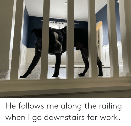 Aww Memes: He follows me along the railing when I go downstairs for work.