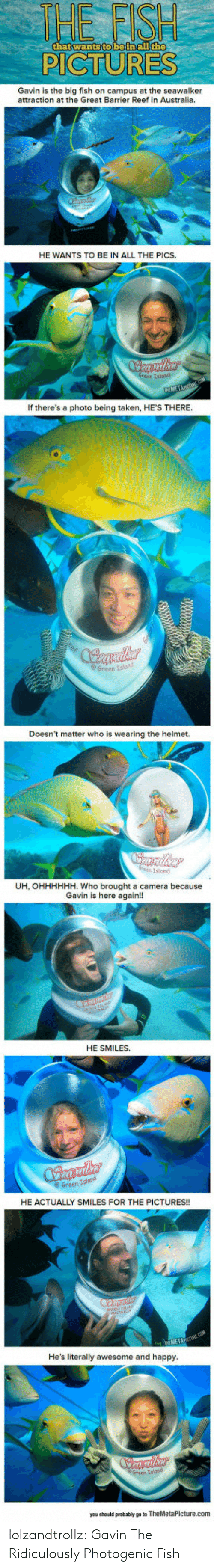 Taken, Tumblr, and Australia: HE FST  the  thatwantsto beinallt  PICTURES  Gavin is the big fish on campus at the seawalker  attraction at the Great Barrier Reef in Australia.  HE WANTS TO BE IN ALL THE PICS.  tsiond  If there's a photo being taken, HE'S THERE  e Green Islond  Doesn't matter who is wearing the helmet.  Island  UH, OHHHHHH. Who brought a camera because  Gavin is here again!!  HE SMILES.  Green  HE ACTUALLY SMILES FOR THE PICTURES!!  He's literally awesome and happy  you shoald peobably po to lolzandtrollz:  Gavin The Ridiculously Photogenic Fish