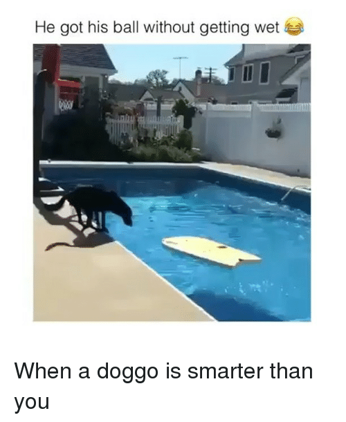 Funny, Doggo, and Got: He got his ball without getting wet  ieer When a doggo is smarter than you