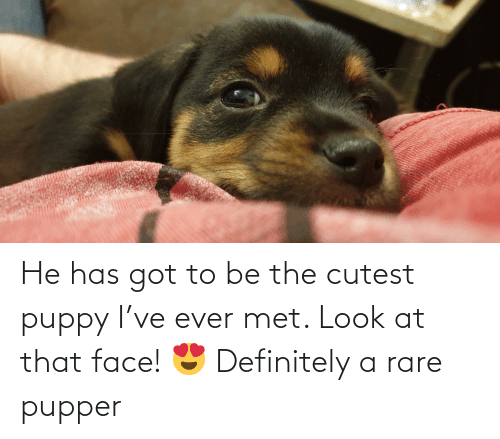 Aww Memes: He has got to be the cutest puppy I've ever met. Look at that face! 😍 Definitely a rare pupper