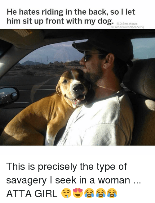 Memes, Reddit, and Girl: He hates riding in the back, so l let  him sit up front with my dog. aDrßmashlox  Pic: reddit u/irishlacenetdq This is precisely the type of savagery I seek in a woman ... ATTA GIRL 🤤😍😂😂😂