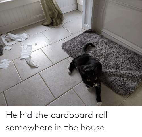 somewhere: He hid the cardboard roll somewhere in the house.
