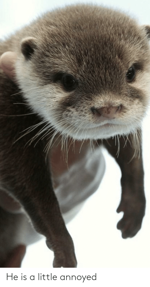Aww Memes: He is a little annoyed