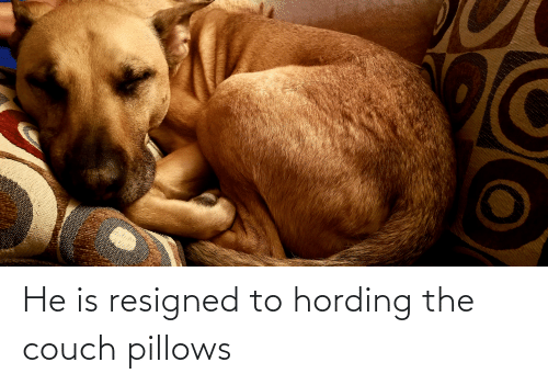 pillows: He is resigned to hording the couch pillows