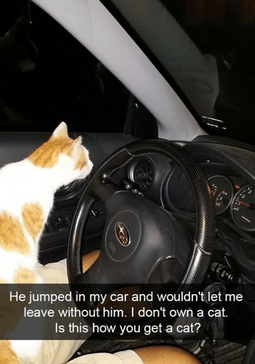 Memes, Jumped, and 🤖: He jumped in my car and wouldn't let me  leave without him. I don't own a cat.  Is this how you get a cat?