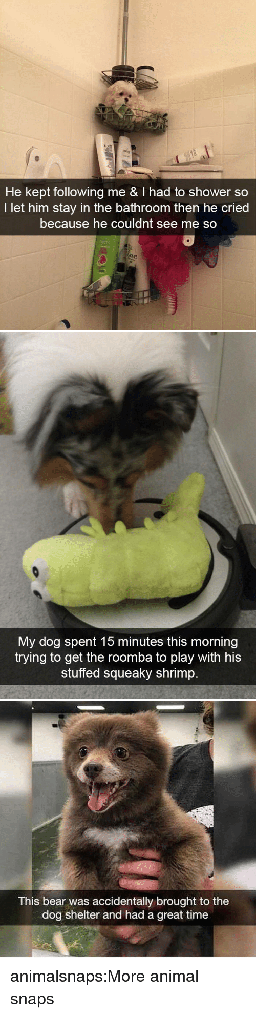 Shower, Target, and Tumblr: He kept following me & I had to shower so  I let him stay in the bathroom then he cried  because he couldnt see me so   My dog spent 15 minutes this morning  trying to get the roomba to plav with his  stuffed squeaky shrimp   This bear was accidentally brought to the  dog shelter and had a great time animalsnaps:More animal snaps