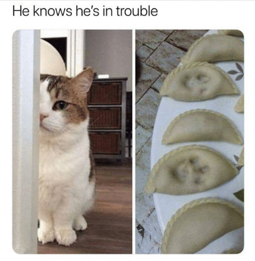 Aww Memes: He knows he's in trouble
