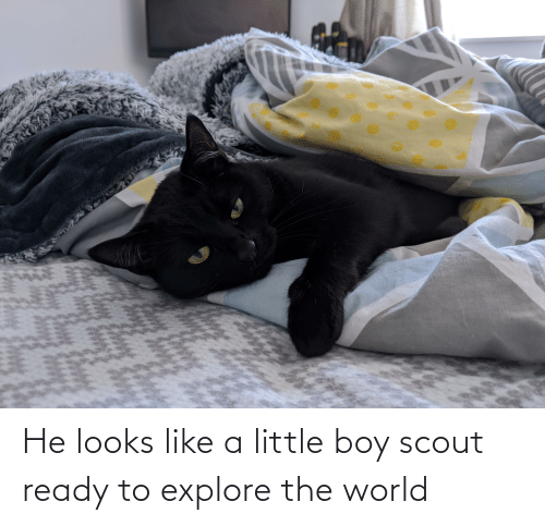 Aww Memes: He looks like a little boy scout ready to explore the world