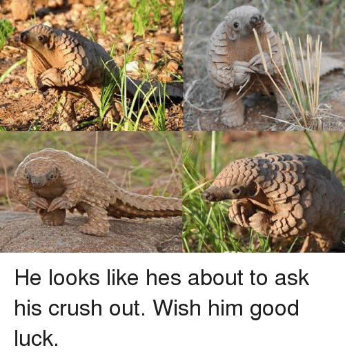 Crush, Good, and Luck: He looks like hes about to ask his crush out. Wish him good luck.