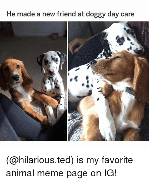 Animal Meme: He made a new friend at doggy day care (@hilarious.ted) is my favorite animal meme page on IG!