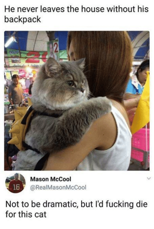 Fucking, Memes, and House: He never leaves the house without his  backpack  Mason McCool  @RealMasonMcCool  16  Not to be dramatic, but I'd fucking die  for this cat