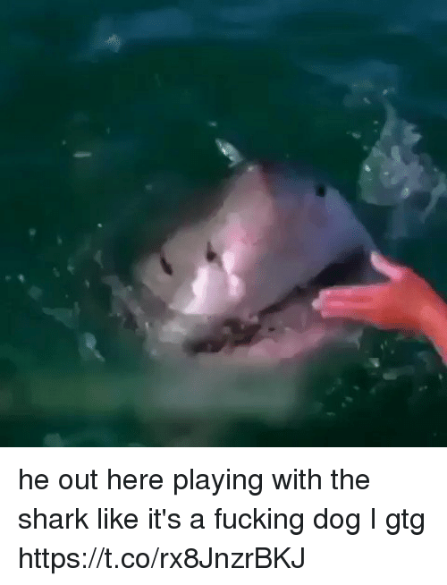 Fucking, Funny, and Shark: he out here playing with the shark like it's a fucking dog I gtg https://t.co/rx8JnzrBKJ