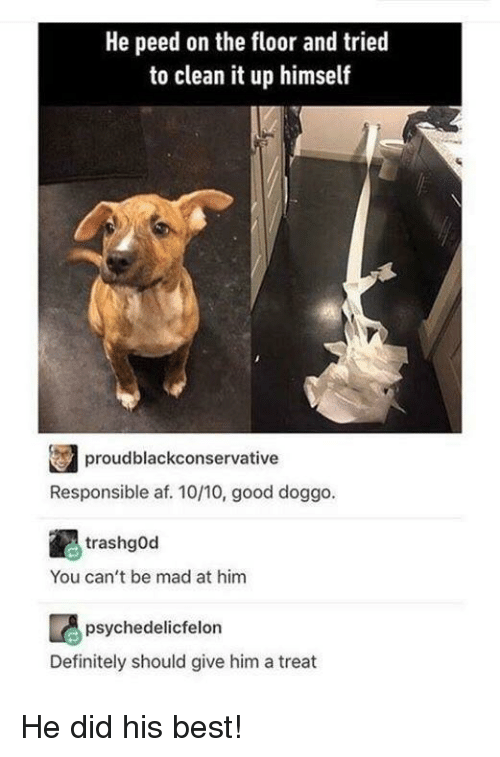 Good Doggo: He peed on the floor and trie  to clean it up himself  proudblackconservative  Responsible af. 10/10, good doggo.  trashgOd  You can't be mad at him  psychedelicfelon  Definitely should give him a treat He did his best!