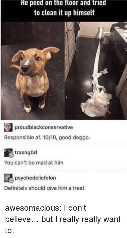 Good Doggo: He peed on the floor and tried  to clean it up himself  proudblackconservative  Responsible af. 10/10, good doggo  trashgOd  You can't be mad at him  psychedelicfelon  Definitely should give him a treat awesomacious:  I don't believe… but I really really want to.